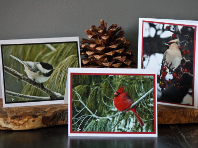 Fine Art Photography Notecards